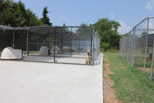 kennels1