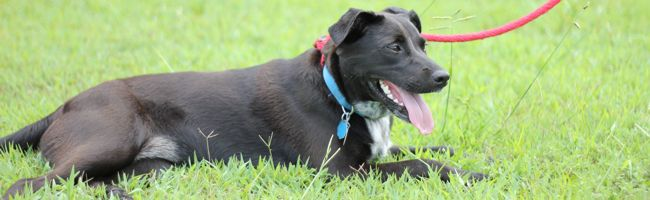 Jada needs a home!